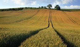Western Potash - Agrarfeld