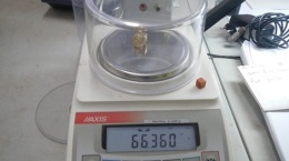 Diamant mit 66,36 Karat aus der aktuellen Alluvialproduktion; Foto: Lucapa Diamond